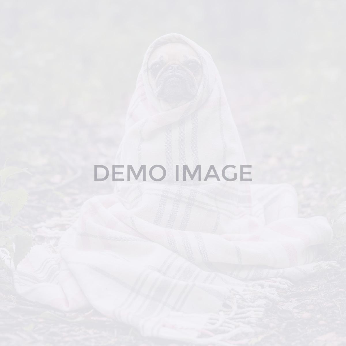 blog-dynamic_halloween