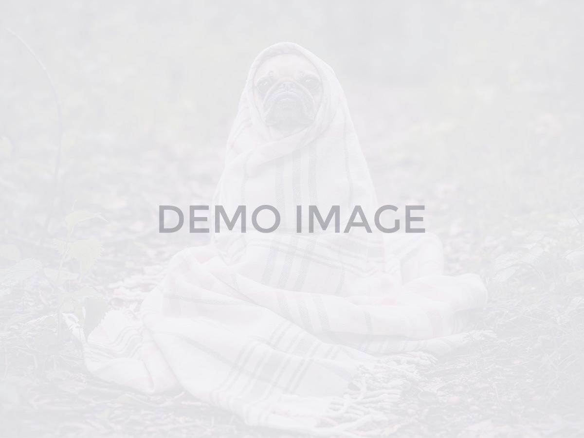 blog-dynamic_nano