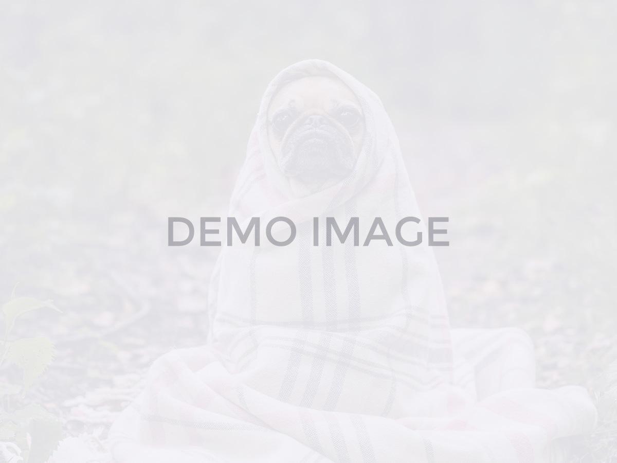 blog-dynamic_widgetkit